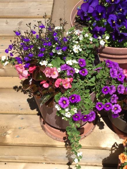 mixed planting